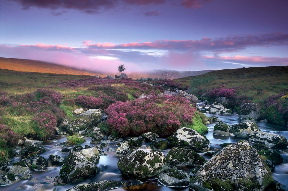 Wicklow Roots