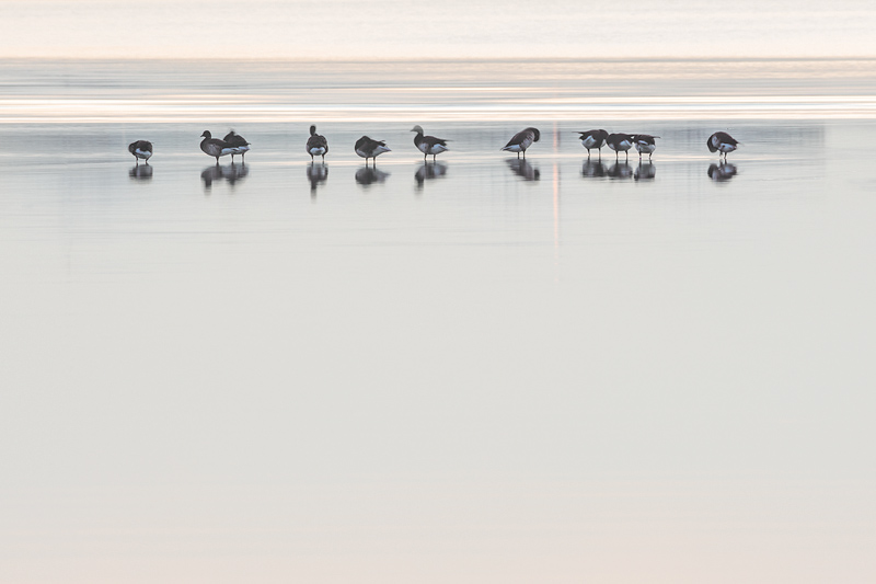 Birds Sandymount